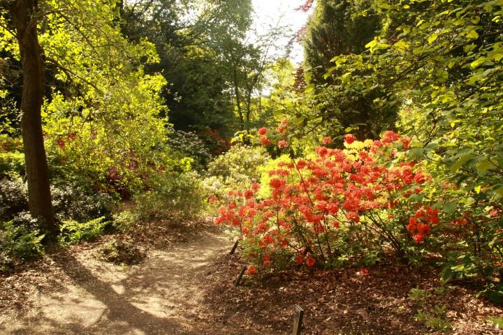 Arboretum Wageningen tijdens Capitulatietocht
